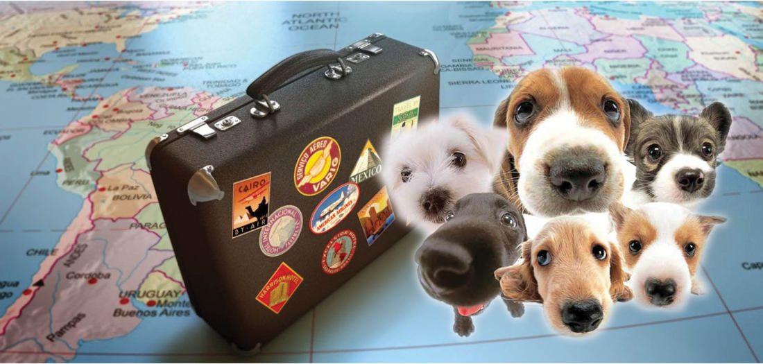 Lo que debes saber si quieres llevar a tu mascota contigo en el avión